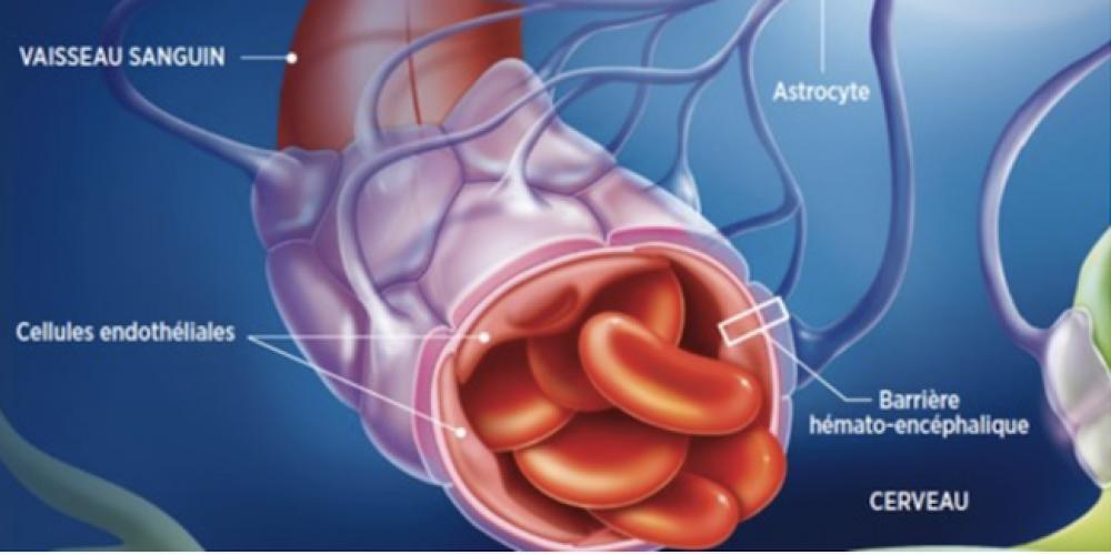 Effet du vaccin Covid sur le sang et protéine Spike: le danger se préciserait